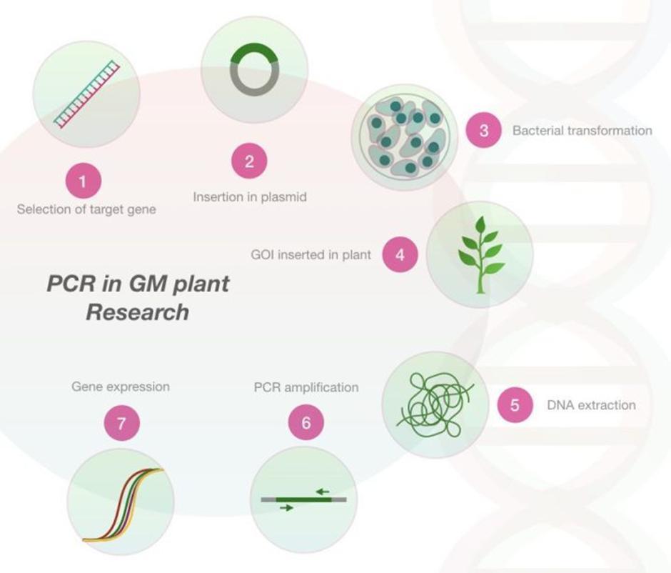 Penelitian Genetic Modified Organism
