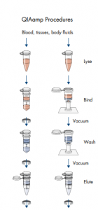 Ekstraksi DNA RNA