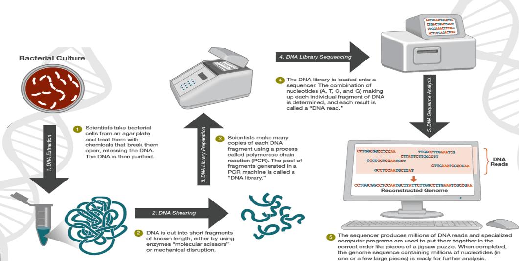 Workflow pengerjaan NGS untuk WGS