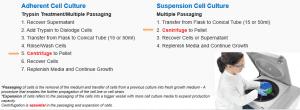 Pentingnya Centrifuge dalam workflow pengerjaan kultur sel