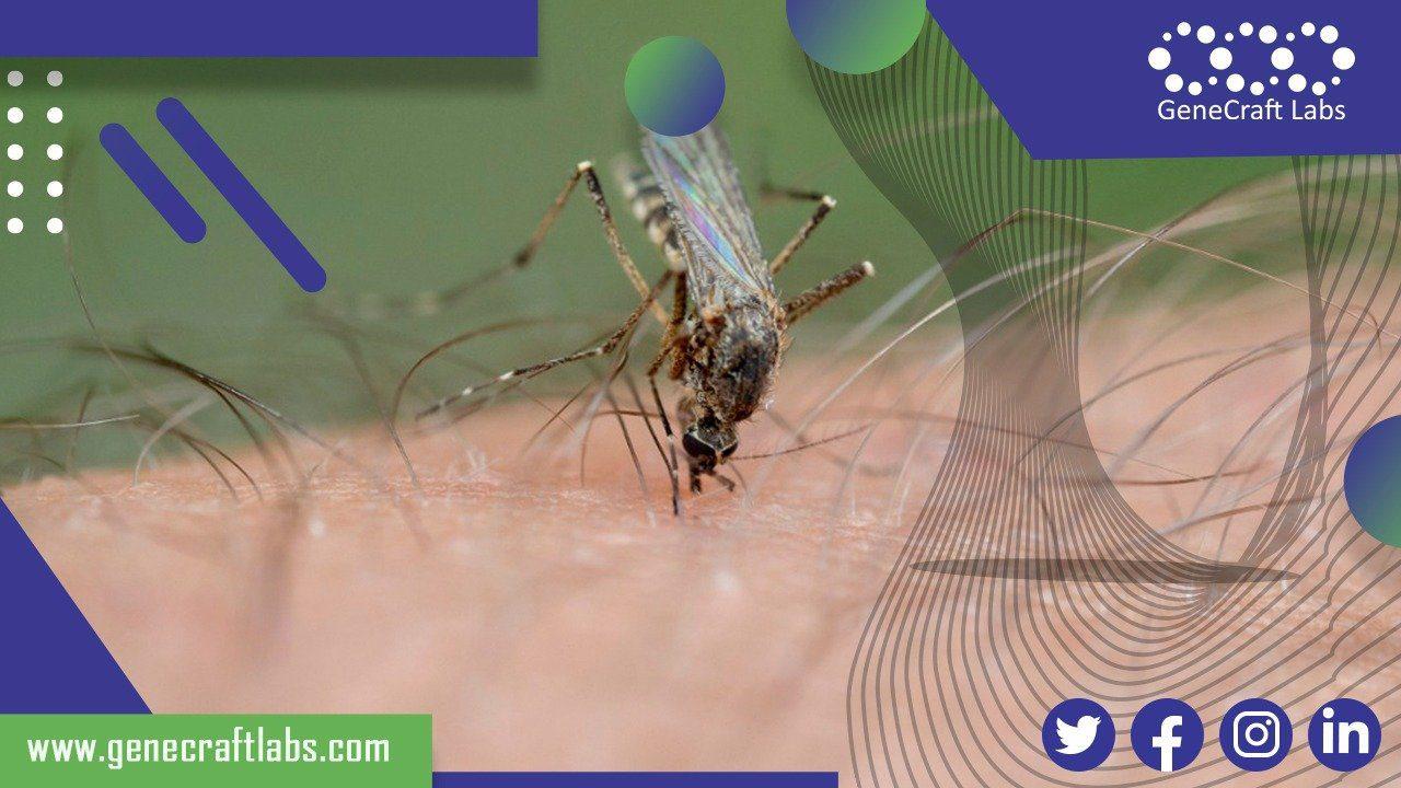 deteksi kasus malaria